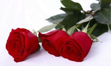 розы поштучно в Туле